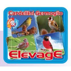 Elevage - Cardellini Germoglio 1 kgr